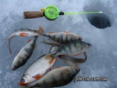 Особенности ловли рыбы в феврале месяце